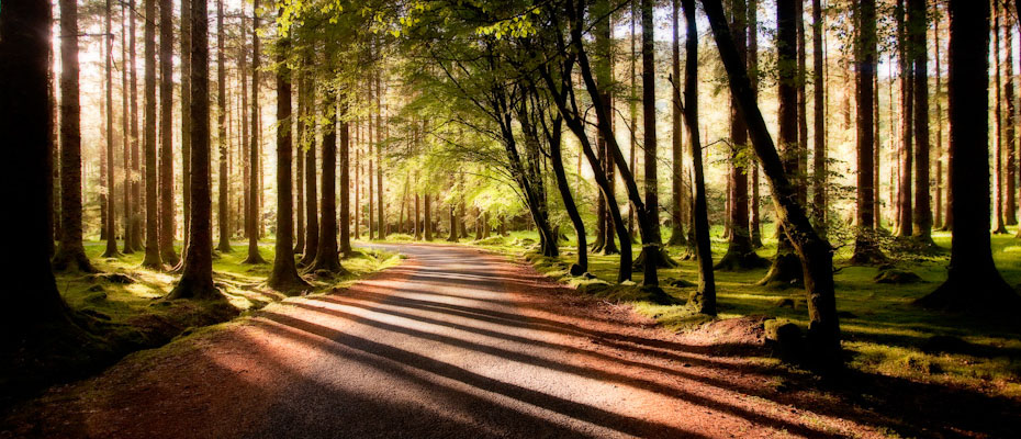 Gouganne Barra Woods